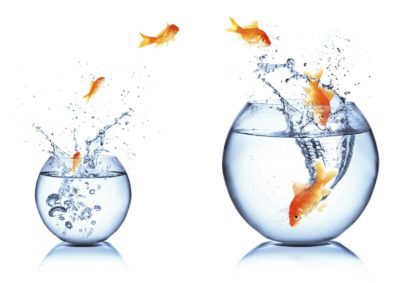 Springende Goldfische